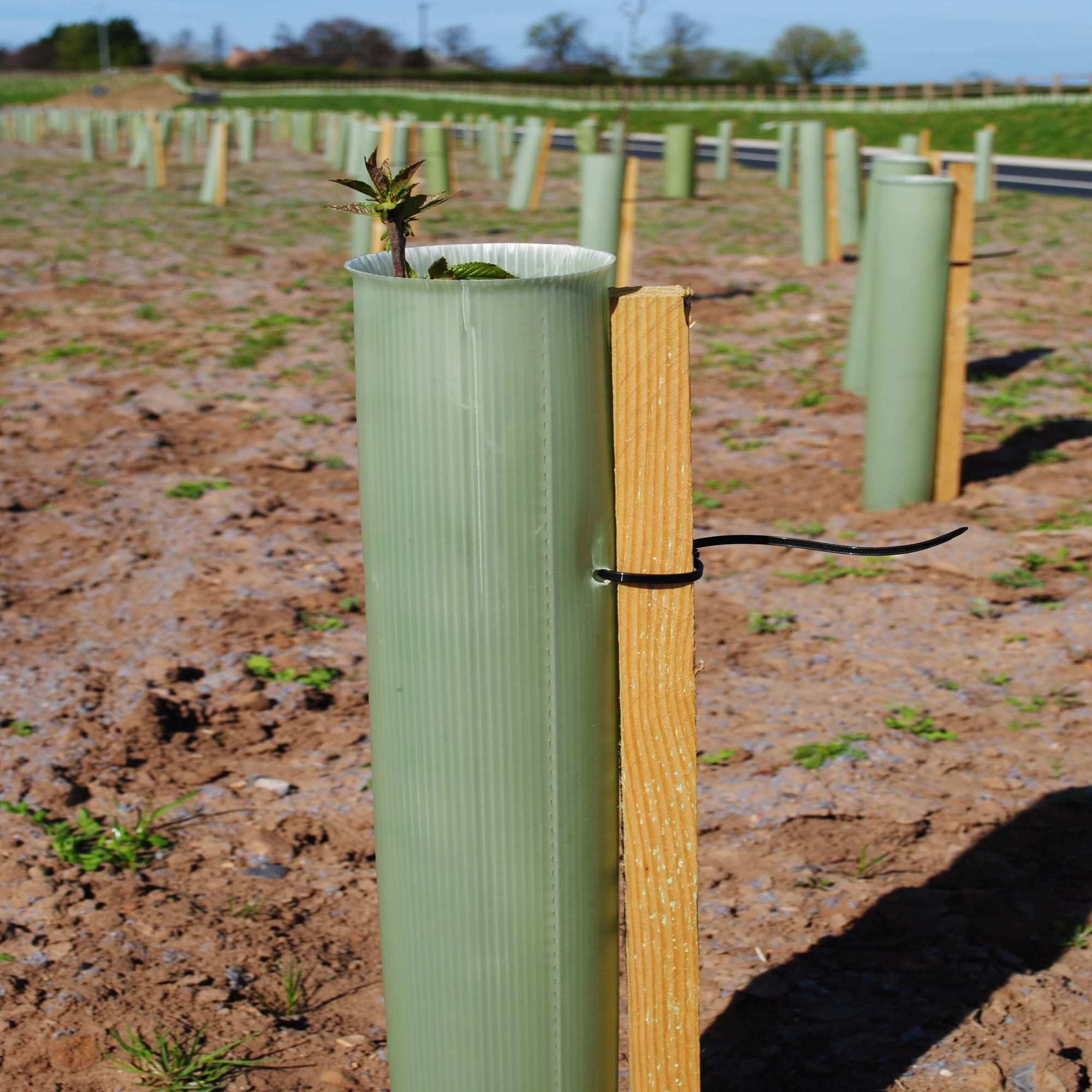 Tree Stakes, Fence Posts & Canes